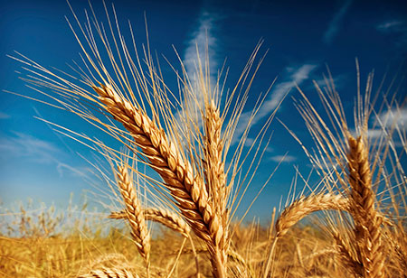 Gluten free diets for those who suffer from celiac disease