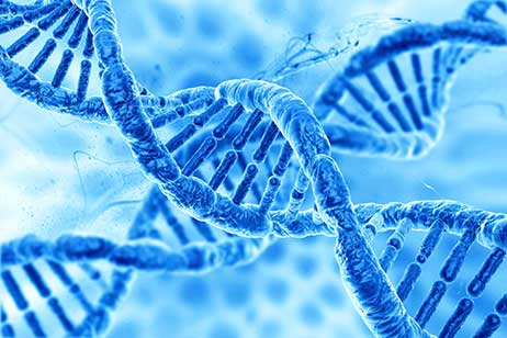 genetic mutation - BRCA 2 and BRCA 3 - HonorHealth